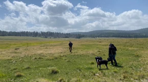 Hikers with dogs in open grassland